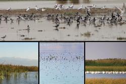 ظرفیت اکوتوریسم بهشت پرندگان در ایران؛ قابلیتی که نیازمند شکوفایی است