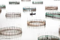 پرورش آبزیان در چین