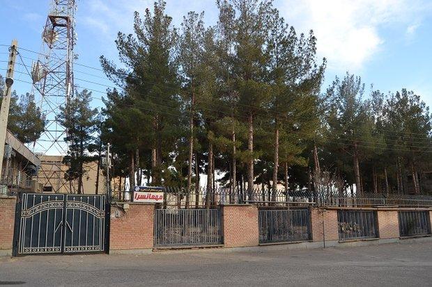 قطع ۱۱ اصله درخت کاج خشک در مخابرات شاهرود با مجوز انجام شد,