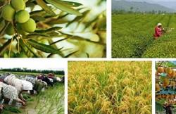 کنفرانس اقتصاد کشاورزی