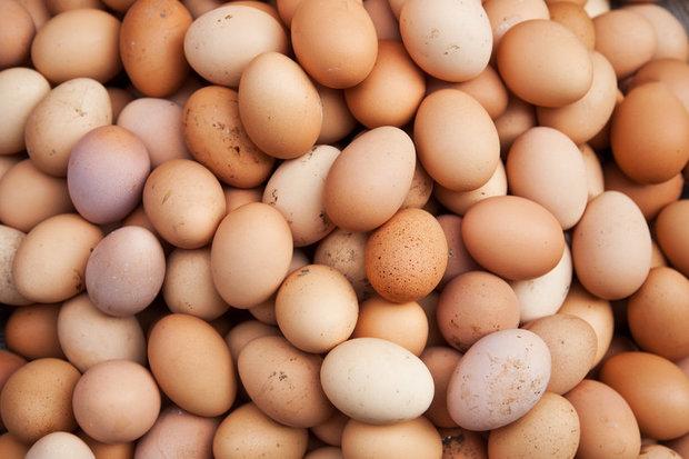 کسری تخم مرغ از طریق واردات تامین می شود/مردم مرغ درشت مصرف نکنند