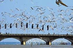 کسب درآمد از پرندهنگری آسانتر و سالمتر از شکار پرندگان است