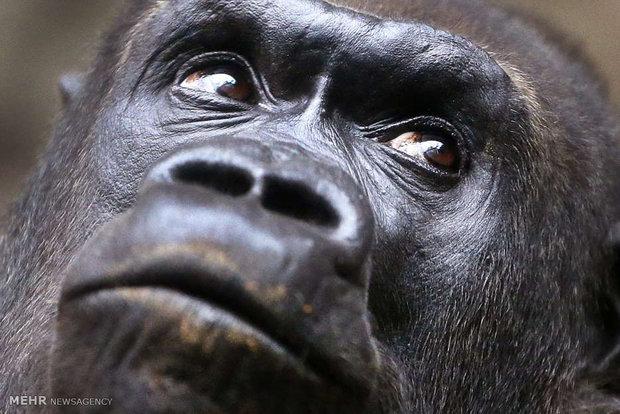 تصاویر زیبا از دنیای حیوانات