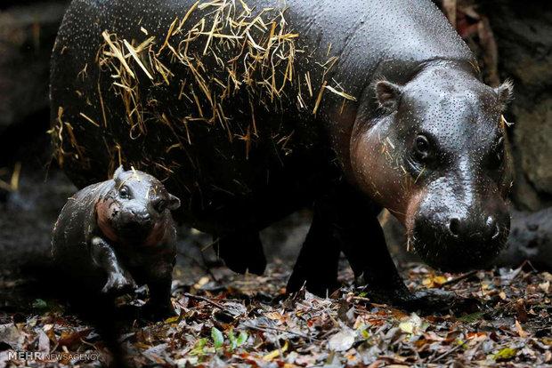 صور جميلة لعالم الحيوانات