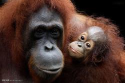 سنگاپور میں چڑیا گھر کے حیوانات کے بچے