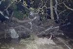 جستجوی قربانیان رانش زمین در کالیفرنیا