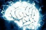 موزه و مرکز علمی مغز راه اندازی می شود