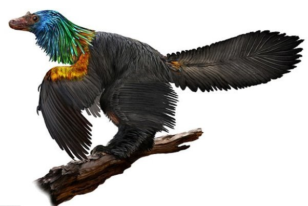 کشف فسیل دایناسوری با پرهای رنگارنگ در چین,