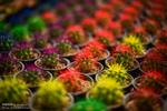 سیزدهمین نمایشگاه گل و گیاه در شیراز