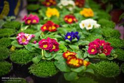 تولید ۶۹ گونه گیاه زینتی توسط شهرداری قم