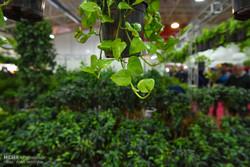 صنعت گل پشت دروازه های صادرات خار می شود/ یک گام تا ۱۰۰۰هکتاری شدن گل
