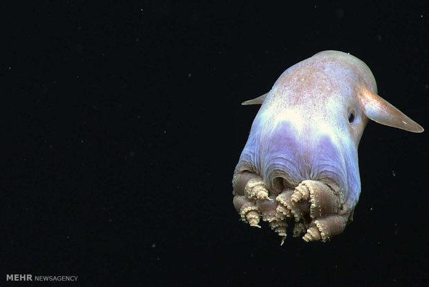 گونه های حیات در اعماق خلیج مکزیک