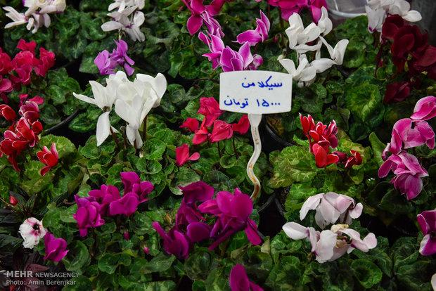 """Şiraz kentinde """"Flower Show"""" devam ediyor"""