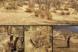 قطع سالانه ۵۰ هزار اصله درخت در مازندران/متهم تراشی جالب یک شورا