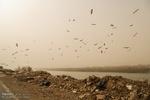 توده گرد وغبار خارجی در آبادان به بیش از۱۶برابر حد استاندارد رسید