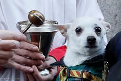 اسپین میں سینٹ انتھونی کا دن حیوانات کی بخشش کا دن