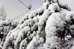 بارش برف در شهرستان دلفان استان لرستان