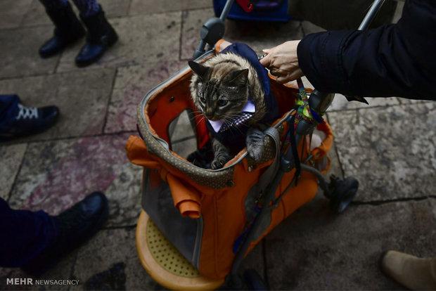 آمرزش حیوانات در روز سنت آنتونی