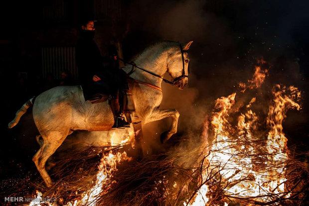 پاک سازی معنوی اسب ها با آتش