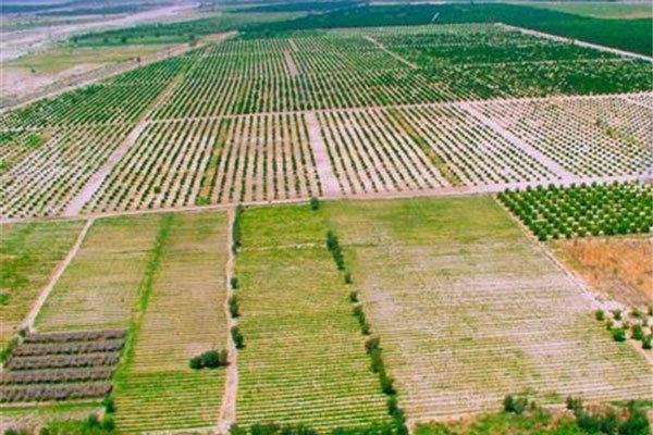 اجرای طرح کاداستر در ۴۵۰ هزار هکتار اراضی کشاورزی استان بوشهر