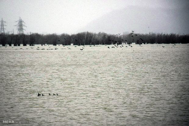 مهاجرت پرندگان به اوج رسید/ فریدونکنار همچنان قتلگاه پرندگان