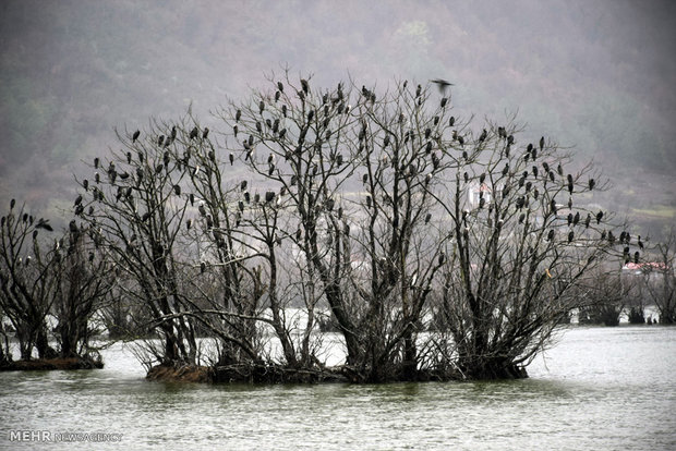 Migratory birds stop at Iranian border city of Astara