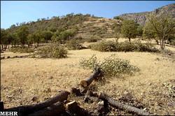 کاهش ۷۳ درصدی تخریب و تصرف اراضی ملی کشور