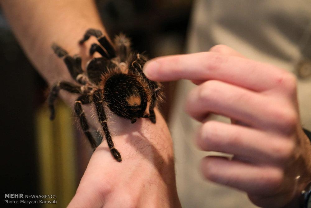 2699842 - آشنایی با مرد عنکبوتی ایران به همراه عکس