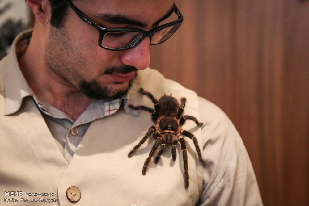 2699844 - آشنایی با مرد عنکبوتی ایران به همراه عکس
