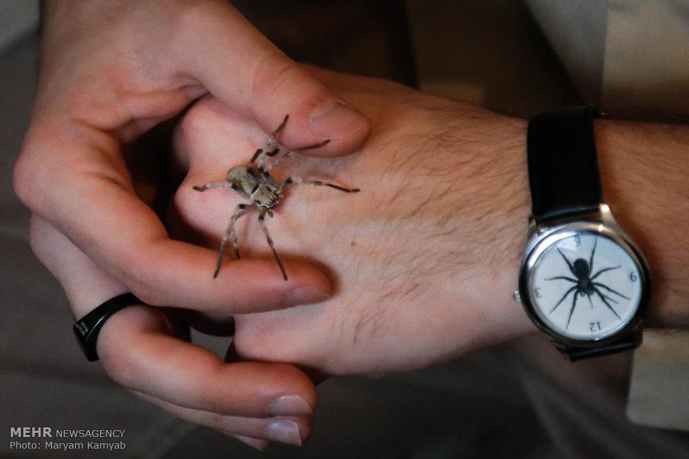 2699862 - آشنایی با مرد عنکبوتی ایران به همراه عکس