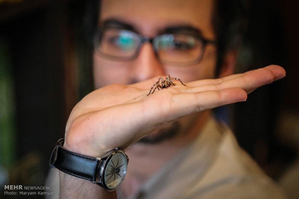 2699865 - آشنایی با مرد عنکبوتی ایران به همراه عکس