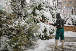 به کارگیری ۴ هزار کارگر فضای سبز برای تکاندن برف از درختان