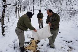 """حماة البيئة ينثرون الحبوب لإطعام الطيور في """"كيلان"""" شمال البلاد"""