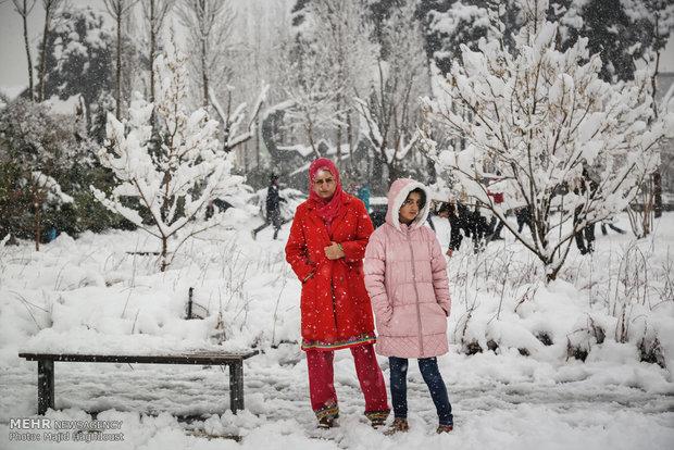 عکس تهران برف و بوران بارش برف در تهران اخبار تهران