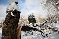 بازدید سر زده  شهردار ازسایت های برف روبی همراه بارسانه های خودی