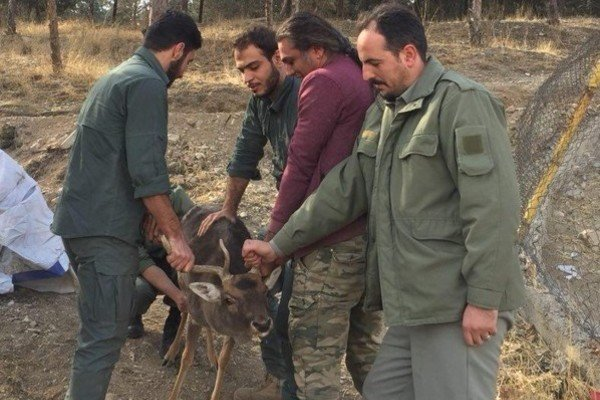 Wildlife conservation center closed in Tehran
