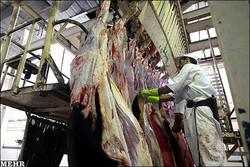 ۱۲ هزار راس گوسفند ماهانه در چهارمحال و بختیاری کشتار می شود