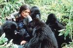 حفاظت کنندگان طبیعت؛ بازیگرانی که دوست دارند بزرگ انگاشته شوند