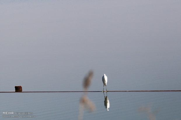«مهمانکشی» از شمال تا جنوب/سیاهچاله پرندگان مهاجر بزرگتر میشود