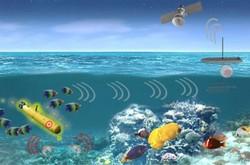 موجودات دریایی تهدیدهای نظامی را رصد می کنند