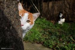 استانبول شهر گربه ها
