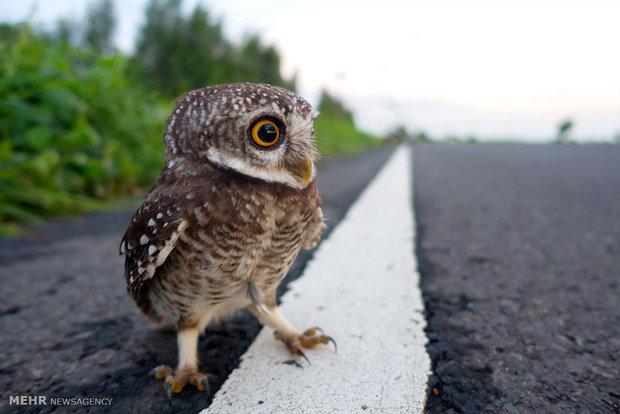 Baykuşlar dünyasından muhteşem görüntüler