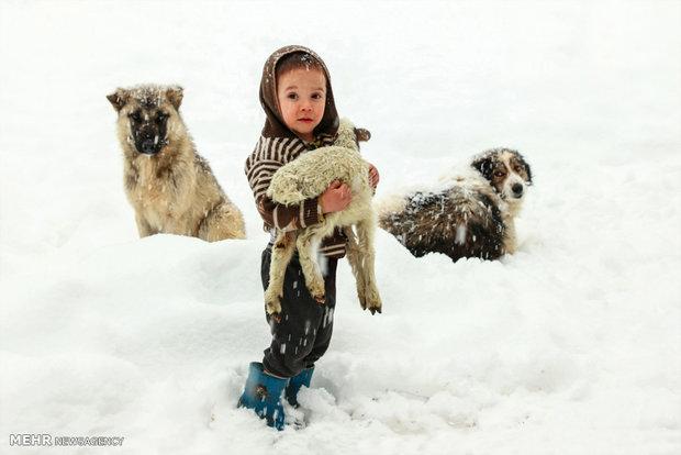 عکس های منتخب جشنواره نور نگار