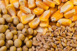 صادرات ۵۰۰ تن خوراک آبزیان از چهارمحال و بختیاری