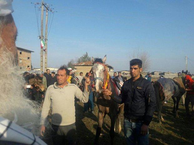 مسابقات سوارکاری بومی محلی در نمک چال بهشهر برگزار شد