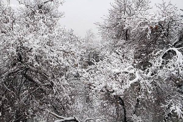 برف، باد و باران پایتخت واستانهای غربی و شمالی را فرا میگیرد