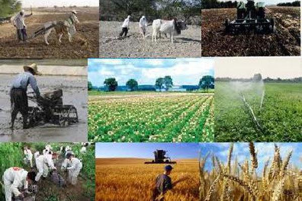 دبیر همایش فرصتهای تولید و اشتغال بخش کشاورزی: بیکاری در بخش کشاورزی سبب خالی شدن روستاهای خراسانجنوبی شده است
