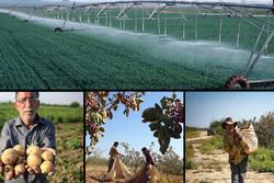 اردبیل قطب تولید بذر در کشور/ بحران کم آبی چالش مهم کشاورزی است