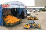 توزیع میوه با کیفیت در غرفههای نوروزی سازمان میادین قم