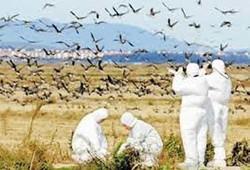 گشت پیشگیری از وقوع آنفلوانزای فوق حاد پرندگان در گرمسار ایجاد شد